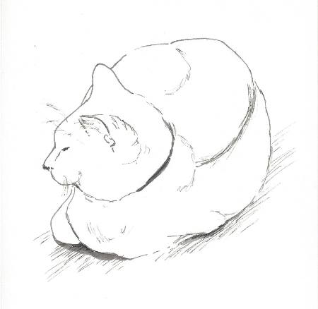 Sketchy ela